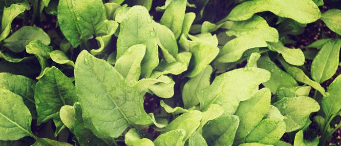 Leckerer Maultaschenauflauf mit Spinat
