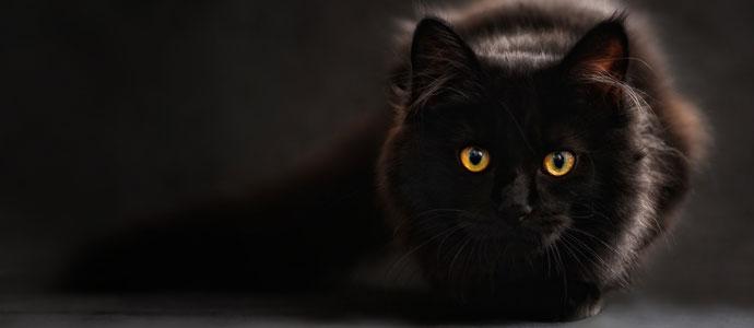 Manipulation durch einen Katzenkönig, der angeblich auf die Welt kommen soll und die Menschheit vernichtet.